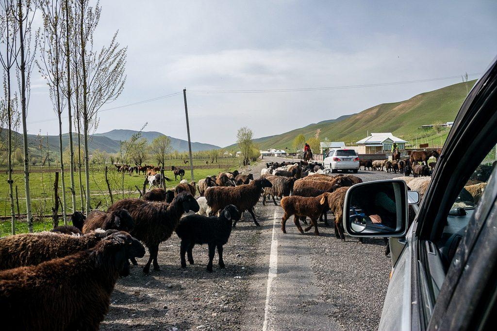 A very standard scene in Kyrgyzstan!